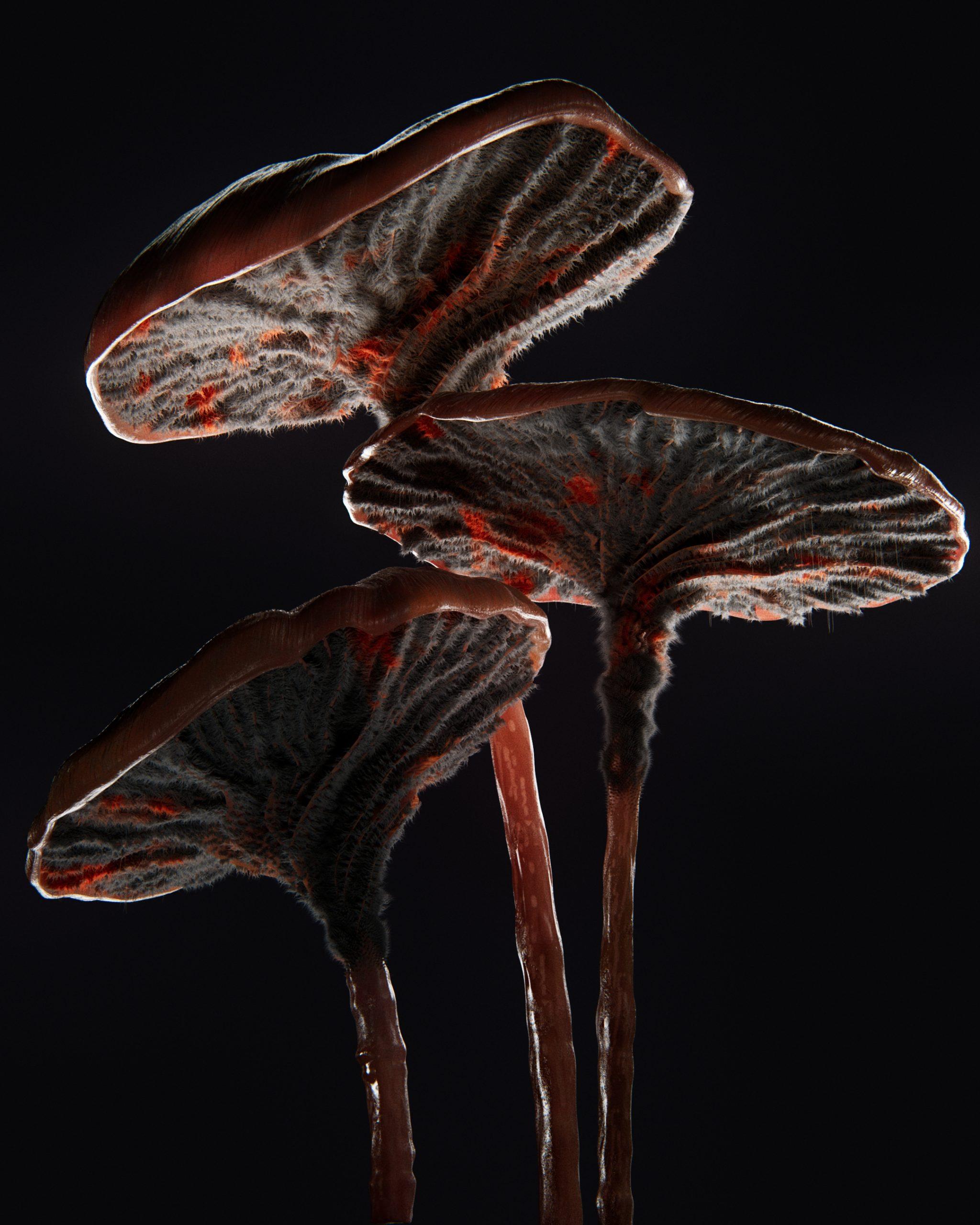 Mushroom01_v20201118C_1.4.1